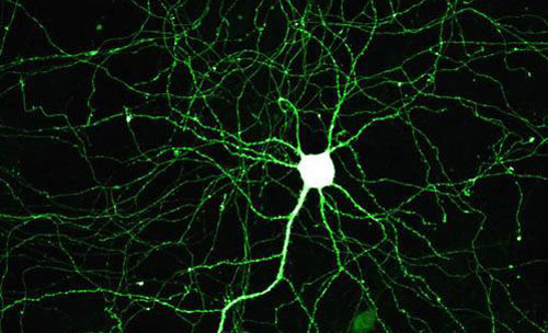 Genes and the Adapted Mind