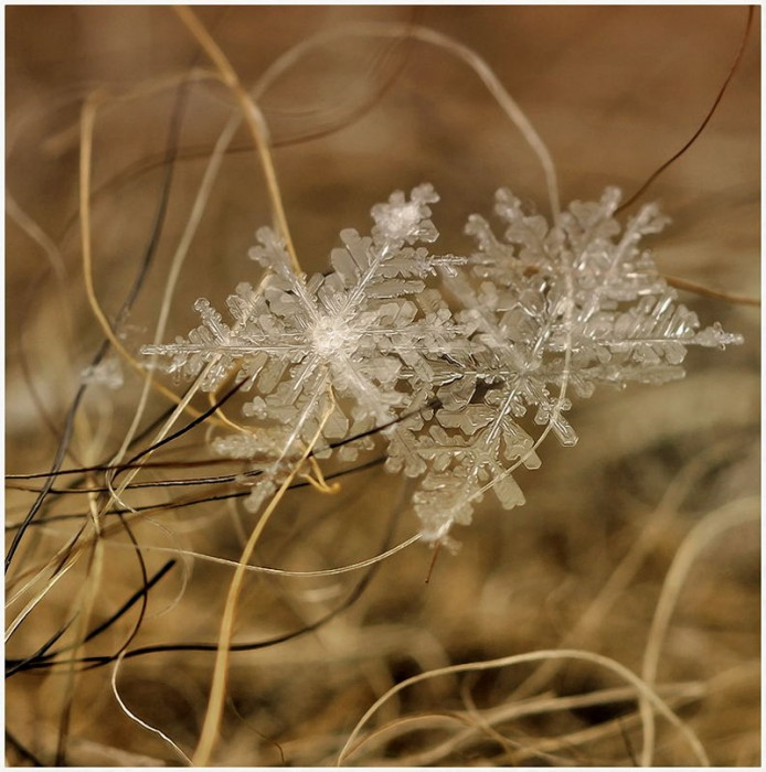 Snow Antics-4b910-et-d4763d9