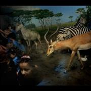 09-safari-nh