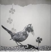 Catbird Chronicle